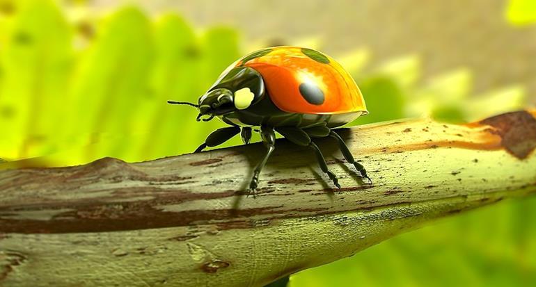 虫に好かれる人とは!?スピリチュアル的に見ると虫に好かれる人ってどんな人?