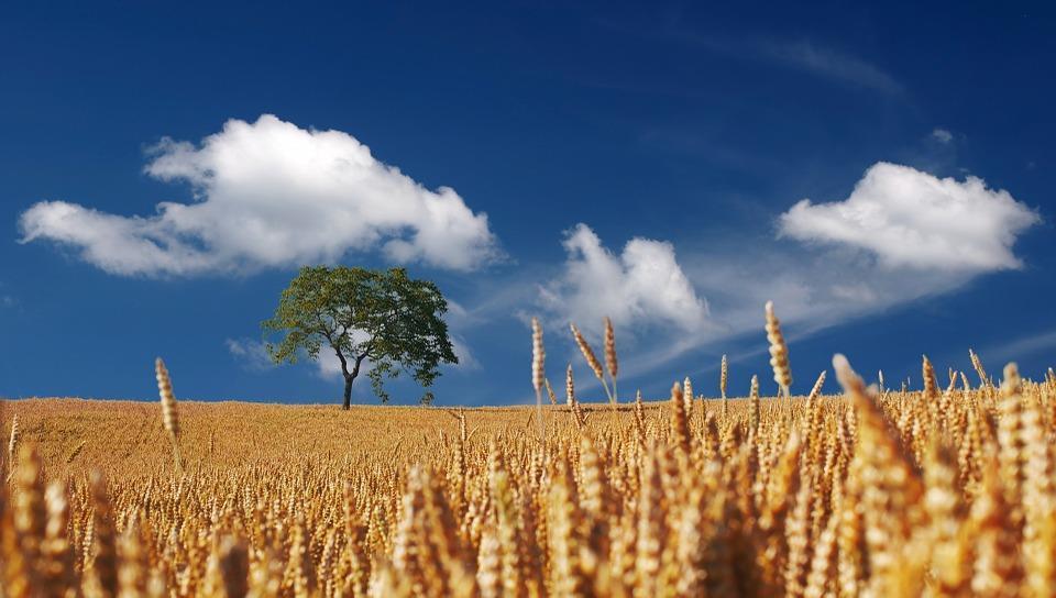 人生は経験と感動の収穫の場!江原啓之さんの格言から学べること
